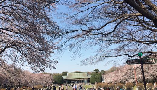 都立小金井公園の桜も満開。平日の昼間なのに花見客がいっぱい!
